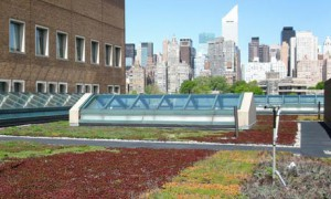 Green Infrastructure Grant Program: Eligibility Workshop @ St. Francis College - Callahan Room  | New York | United States
