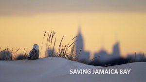 Saving Jamaica Bay - Screening @ American Legion Hall - Post 1404  | New York | United States